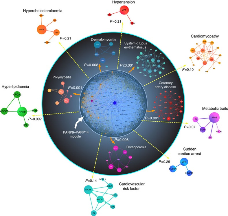 Network analysis links PARP9–PARP14 with coronary artery disease. The PARP14 (blue)–PARP9 (purple) module consists of the first neighbours of each protein (light blue and orange nodes, respectively). The significance of closeness of the PARP9–PARP14 first neighbours in the interactome (PARP9–PARP14 module) and disease modules compared with random expectation is indicated by P values. The random expectation was same size-connected components of PARP9–PARP14 module and a disease module drawn randomly from the network. Closeness between PARP9–PARP14 modules and other diseases such as cardiovascular, metabolic and IFNγ-related diseases was evaluated in the network. The inner circle contains significantly close disease modules.