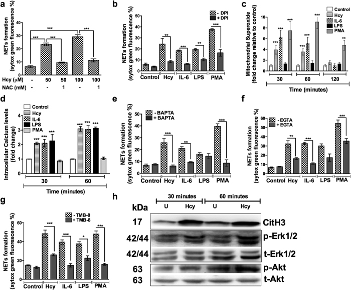 Homocysteine induced NETosis is ROS and Ca2 + influx dependent. Freshly isolated peripheral neutrophils were pretreated with either N-acetyl cysteine (1 mM) ( a ) or <t>Diphenyleneiodonium</t> (20 μM) ( b ) or BAPTA (10 μM) ( e ) or <t>EGTA</t> (10 mM) ( f ) or TMB-8 (20 μM) ( g ) for 30 minutes and followed by activation either in presence or absence of homocysteine alone ( a ) or homocysteine (100 μM) IL-6 (25 ng/ml), PMA (20 ng/ml), LPS (2 μg/ml) for three hours. Extent of NETs formation was measured after staining with SYTOX Green (5 μM) in fluorimeter. Data is represented as percentage of maximal SYTOX Green fluorescence. Statistically significant modulation in NETosis is denoted by asterisk ***p