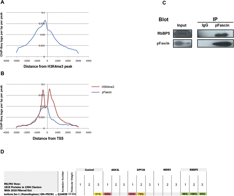 ChIP-seq analysis reveals remarkable colocalization of pFascin with H3K4me3. ( A ) Histogram representing pFascin binding sites distribution and density relative to H3K4me3 peaks. ( B ) Histogram representing pFascin and H3K4me3 binding sites distribution and density relative to the transcription start site (TSS). ( C ) The interaction of Fascin protein with H3K4 methylatransferase complex was analyzed following immunoprecipitation of BT-20 extracts with antibodies directed against pFascin followed by western blot analysis and immunochemical detection of RbBP5 and pFascin. ( D ) Screenshot from Scaffold 4 program showing the results of mass spectrometry data of H3K4me3 core subunits interactors. Fascin is clearly and specifically interacting with RbBP5. For each subunit, the immunoprecipitation was done in triplicate. The percentages represent the peptide identification probability.