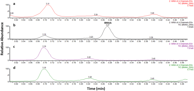 Ultra-high performance liquid chromatography-tandem mass spectrometry analysis of free BMAA extracts. Chromatograms of ( a ) blank lamb's brain extract, ( b ) a matrix matched standard solution of BMAA, ( c ) control patient's brain extract and ( d ) alzheimer's diseased brain extract. (MRM, multiple reaction monitoring).