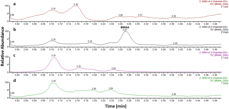 Ultra-high performance liquid chromatography-tandem mass spectrometry analysis of protein-bound BMAA extracts. Chromatograms of ( a ) blank lamb's brain extract, ( b ) a matrix matched standard solution of BMAA, ( c ) control patient's brain extract and ( d ) alzheimer's diseased brain extract. (MRM, multiple reaction monitoring).
