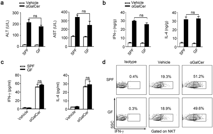 NKT cells in SPF and GF mice have similar function. ( a , b ) <t>αGalCer</t> (250 μg/kg) or vehicle were injected into BALB/c mice, samples were analyzed 24 hr post-injection. ( a ) Serum ALT and AST levels. ( b ) Liver IFN-γ and IL-4 levels were measured by ELISA. ( c , d ) Splenic cells from untreated SPF and GF mice were cultured with the stimulation of either αGalCer or vehicle for 24 hr. ( c ) IFN-γ and IL-4 levels in the supernatant were analyzed by Elisa. ( d ) Intracellular IFN-γ expression in NKT cells were analyzed by flow <t>cytometry.</t> The data represent means ± SEM (n = 8), ns represents not significant, One-way ANOVA.