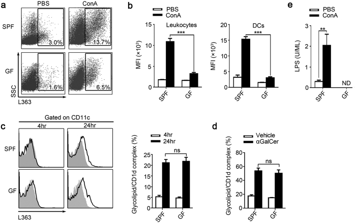 Levels of CD1d-presented and un-presented glycolipids are substantially lower in GF mice. ( a , b ) SPF and GF BALB/c mice were sacrificed 24 hr after ConA or PBS injection. ( a ) Using mAb L363, we detected the percentage of glycolipid/CD1d complexes in the intrahepatic leukocytes, gated on total leukocytes. ( b ) The mean fluorescence intensity (MFI) of glycolipid/CD1d complexes on total intrahepatic leukocytes and DCs. ( c ) To compared the glycolipids presenting ability between SPF and GF mice, splenic cells from untreated SPF and GF BALB/c mice were cultured with either αGalCer or vehicle stimulation for 4 and 24 hr. Then used L363 to analysis the glycolipid/CD1d complex expression on DCs by flow cytometry, filled flow cytometric histograms represent cultured with vehicle, and opened histograms represent cultured with αGalCer. ( d ) Mice were sacrificed 24 hr post αGalCer (250 μg/kg) or vehicle injection. Using L363, the glycolipid/CD1d complex on hepatic DCs was analyzed by flow cytometry. ( e ) Plasma LPS levels of SPF and GF mice 24 hr after ConA or PBS injection. The data represent means ± SEM (n = 8, two independent experiments), **P