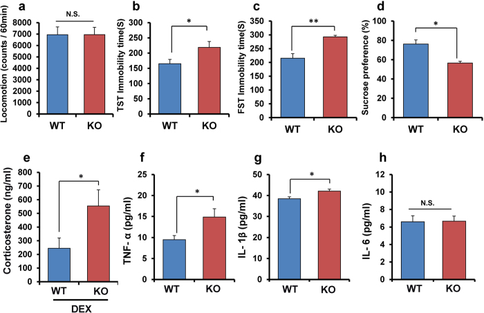 Depression-like phenotypes, and inflammation in α7 nAChR KO mice. ( a ) locomotion, ( b ): tail-suspension test (TST), ( c ): forced swimming test (FST), ( d ): 1% sucrose preference test (SPT). Data represent the mean ± S.E.M. (n = 8 or 9). ( e ): Dexamethasone (DEX) suppression test. Data represent the mean ± S.E.M. (n = 8 or 9). ( f ): Serum levels of TNF-α. Data represent the mean ± S.E.M. (n = 11). ( g ): Serum levels of IL-1β. Data represent the mean ± S.E.M. (n = 7 or 8). ( h ): Serum levels of IL-6. Data represent the mean ± S.E.M. (n = 12 or 13). *P
