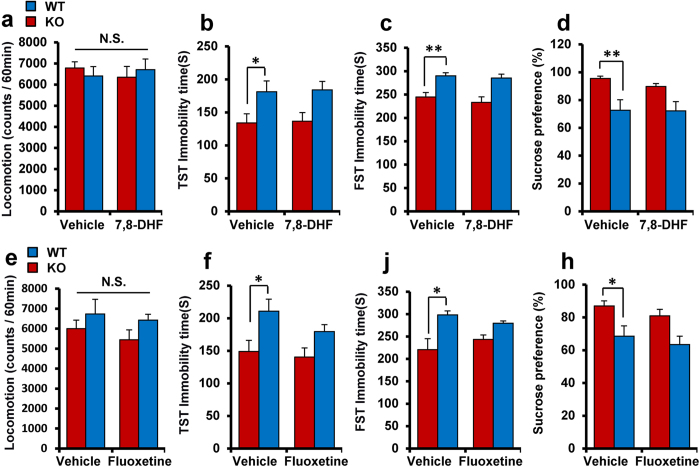 Effects of 7,8-DHF and fluoxetine in α7 nAChR KO mice. ( a , e ): locomotion, ( b , f ): TST, ( c , g ): FST, ( d , h ): SPT): The TrkB agonist 7,8-DHF and SSRI fluoxetine did not show antidepressant effects in α7 nAChR KO mice. Data represent the mean ± S.E.M. (n = 12–14). *P