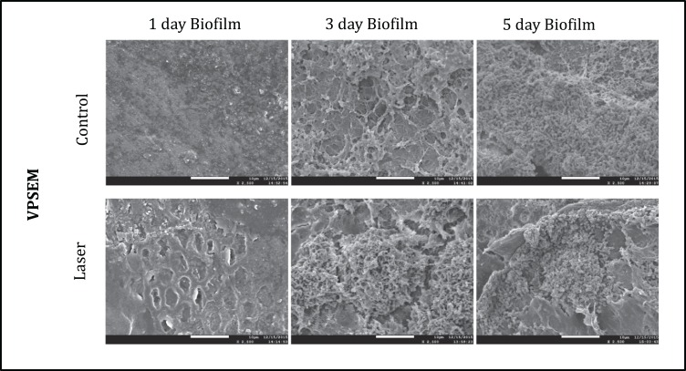 Morphology and structure of after one, three and five days S. mutans biofilms imaged by FESEM (2500X).