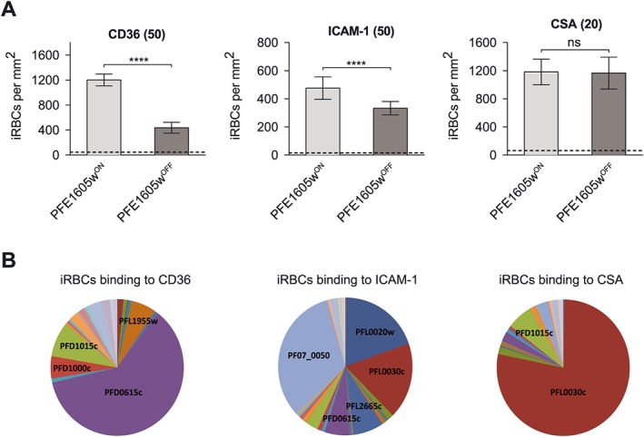 iRBCs <t>expressing</t> a different PfEMP1 variant show different level of reduction in cytoadherence upon conditional depletion of PFE1605w. A. Preselected iRBCs binding to either <t>recombinant</t> CD36, ICAM‐1 or CSA immobilized on tissue‐treated glass slides at 50 µg ml −1 (CD36, ICAM‐1) or 20 µg ml −1 (CSA) concentrations. Parasites expressing PFE1605w as a C‐terminally tagged DD fusion <t>protein</t> were grown for 96 h in the presence (PFE1605w ON ) or absence (PFE1605w OFF ) of 625 nM Shield‐1. The graphs display overall mean values across triplicate experiments using linear regression with a random effect for experiment. The error bars represent the SDs of the triplicate experiments. An arbitrary threshold (dashed line) for unspecific binding was calculated as the mean level of iRBC binding to 1% w/v BSA plus two SDs. P values were calculated by using a two‐tailed Student's t ‐test. The asterisks indicate P ≤ 0.0001. 'ns' indicates P ≥ 0.05. B. Pie charts show the var transcript distribution in the selected lines. qPCR was performed with specific primers for each var <t>gene</t> as previously reported.