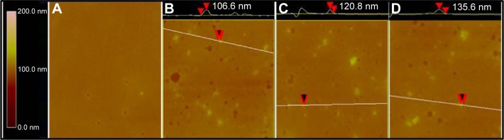 AFM images of mouse plasma alone ( A ), ND in mouse plasma ( B ), NDCONH(CH 2 ) 2 NH-VDGR in mouse plasma ( C ), and NDCONH(CH 2 ) 2 NH-VDGR/survivin-siRNA in mouse plasma ( D ). Abbreviations: AFM, atomic force microscopy; ND, nanodiamond; siRNA, small interfering RNA.