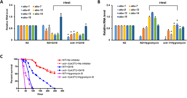 Translational inhibition abolishes the OCTR-1-controlled innate immune responses. ( A ) qRT-PCR of  abu-1 ,  abu-7 ,  abu-8 ,  abu-12 ,  abu-13 ,  abu-14 , and  abu-15  expression in wild-type animals with or without exposure to G418 and in  octr-1 ( ok371 ) animals exposed to G418.  n =3; bar graphs correspond to mean±SEM.  t -tests were performed between N2+G418 and  octr-1 +G418. *indicates significant difference. ( B ) qRT-PCR of  abu-1 ,  abu-7 ,  abu-8 ,  abu-12 ,  abu-13 ,  abu-14 , and  abu-15  expression in wild-type animals with or without exposure to Hygrocymin B and in  octr-1 ( ok371 ) animals exposed to Hygromycin B.  n =3; bar graphs correspond to mean±SEM.  t -tests were performed between N2+G418 and  octr-1 +G418. *indicates significant difference. ( C ) Wild-type and  octr-1 ( ok371 ) animals were exposed to NGM/ E. coli  OP50 (control) or NGM/ E. coli  OP50 containing G418 or Hygromycin B, and scored for survival over time. WT+No inhibitor versus  octr-1 ( ok371 )+No inhibitor:  p =0.7521; WT+G418 versus  octr-1 ( ok371 )+G418:  p