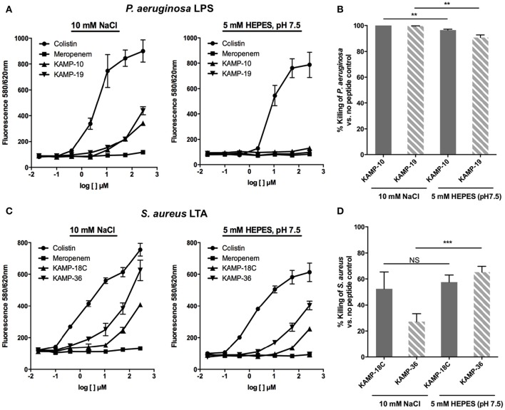 Binding affinity of KAMPs to P. aeruginosa LPS or S. aureus LTA measured by the competitive binding assay . LPS- or LTA-bound BODIPY TR cadaverine in 10 mM NaCl or 5 mM HEPES (pH 7.5) was competitively displaced by agents having affinity of LPS or LTA, resulting in increased fluorescence signal. (A) KAMP-19 and KAMP-10 showed relatively low binding affinities to P. aeruginosa LPS in NaCl ( left ) and no binding in HEPES ( right ). (B) Using the same media, both KAMPs were highly effective against P. aeruginosa . (C) KAMP-18C and KAMP-36 displayed lower binding affinities for LTA in HEPES compared with NaCl. However, (D) these peptides showed similar (KAMP-18C) or stronger (KAMP-36) bactericidal activities in HEPES against S. aureus . Mean ± SD is shown. ** p