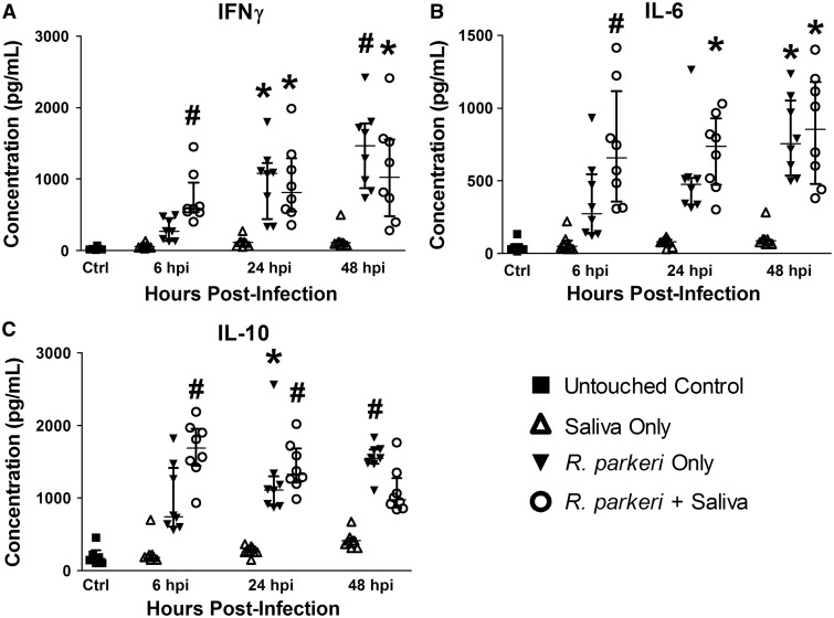 Concentrations of skin inoculation site inflammatory cytokines are increased in response to intradermal R. parkeri inoculation, but not significantly altered by the addition of A. maculatum saliva to the rickettsial inoculum. Concentrations of interferon γ ( A ), interleukin-6 ( B ), and interleukin-10 ( C ) at the cutaneous inoculation site were determined at the indicated time points post inoculation by a magnetic cytokine bead panel kit. These cytokines were significantly elevated at various time points both in response to R. parkeri inoculation alone as well as in response to R. parkeri inoculation with A. maculatum saliva. However, no significant differences were found between the R. parkeri only group and the R. parkeri + saliva group at any time point. The data are presented as the medians and interquartile ranges. P