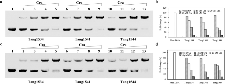 Nonradioactive EMSA of <t>Cra</t> and its binding site in aceBAK . EMSA experiment using 0.75 μM of the Cra site-containing <t>DNA</t> fragment and increasing concentrations of wild type Cra or the Cra mutant proteins in the presence of FBP ( a ) and the gray value of free DNA determined using Quantity one ( b ) and in the absence of FBP ( c ) and the gray value of free DNA determined using Quantity one ( d ). Lane 1, no protein; lane 2–5, 1, 2, 3, 4 μM Cra; lanes 6–9, 1, 2, 3, 4 μM Cra mutant (Tang1541); lanes 10–13, 1, 2, 3, 4 μM Cra mutant (Tang1544), respectively.