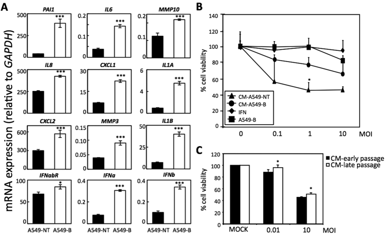 The senescence-induced antiviral response is partially mediated by the SASP. ( A ) Characterization of the expression of different SASP factors by qRT-PCR relative to GAPDH (x10 −3 ) in control untreated (black bars) or senescent bleomycin-treated (white bars) A549 cells. ( B ) Cell viability of A549 cells cultured with conditioned medium (CM) from control untreated or senescent bleomycin-treated A549, after VSV infection at different MOIs. Viability of senescent bleomycin-treated A549 cells or A549 cells cultured in the presence of interferon are shown as controls. ( C ) Cell viability of MEFs cultures with CM from control early passage or senescent late passage MEFs, after VSV infection at MOIs of 0.01 or 10 PFU/cell relative to mock-infected cells. Data are mean values +/− SE from at least three different experiments. *p