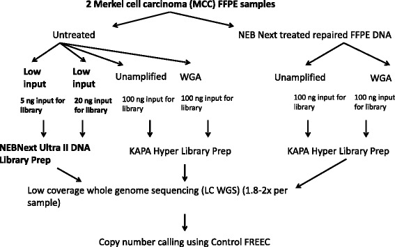 Experimental design testing a low-input method (NEBNext Ultra II) on copy number detection of two FFPE MCC samples by LC WGS as well as the effect of WGA with or without NEB DNA repair treatment