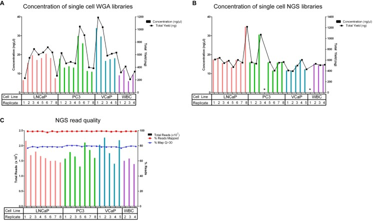 Whole Genome Amplification, library preparation quality control, read quality, output, and alignment quality. (A) DNA concentrations and total yield for each single cell WGA as measured by UV/Vis. Libraries were constructed from independent replicates of single cells: 8 from LNCaP, 8 from PC3, 5 from VCaP, and 4 from WBCs. Overall, we achieved an average 100% success rate during the single cell whole genome amplification procedure: 8/8 single cells (100%) successfully amplified for PC3 and LNCaP cancer cell lines, while 5/5 (100%) single VCaP cells and 4/4 (100%) single WBCs amplified. An average yield of 578 ng (range of 227–1190 ng) was obtained from the single cell WGA reactions. (B) Concentrations of the next-generation sequencing libraries as measured by PicoGreen. All of the NGS libraries passed QC with adequate yield except for two samples that failed to render any detectable amount of library DNA product (one PC3 and WBC replica samples) (23/25; 92% success rate). An average yield of 581 ng (range of 397–1216 ng) was obtained among the single cell NGS libraries. (C) Assessment of NGS read quality. > 99% of the NGS reads had an average PHRED score greater than Q30 pre-alignment, indicating high quality reads. An average of 17 million reads/sample (in each direction) were obtained. 99% of the reads mapped to the reference genome (hg38) with 79% of the reads mapping with a MAPQ score greater than 30. *Failed library preparation.
