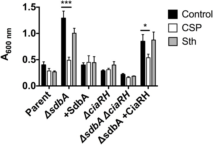 CSP diminishes biofilm formation by the ΔsdbA mutant. Crystal violet staining of 24 h biofilms grown in the presence of either CSP, Sth 1 bacteriocin (Sth), or without added peptide (Control). Biofilms were grown with the parent, ΔsdbA , sdbA -complemented mutant (+SdbA), ΔciaRH , ΔsdbAΔciaRH double mutant, and ΔsdbA ciaRH -complemented mutant ( ΔsdbA +CiaRH). Results are means ± SD of three experiments. Asterisks indicate a significant difference from the control biofilm for each strain, as determined by one-way ANOVA (**** P