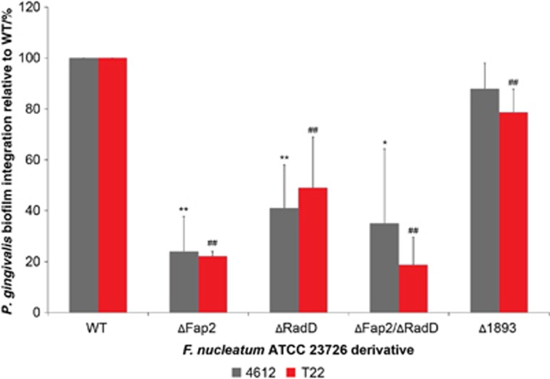 Porphyromonas gingivalis integration in dual-species biofilms with Fusobacterium nucleatum ATCC 23726 ΔFap2, ΔRadD and ΔFap2/ΔRadD outer membrane proteins mutant derivatives. Biofilm integration is given as a percentage relative to biofilm integration measured with WT F. nucleatum ATCC 23726. At least three independent experiments were performed per strain combination. Data represent the means and standard deviation of at least three independent experiments. * P