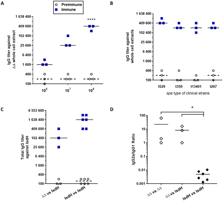 Immunization of mice with the live-attenuated double mutant (Δ720Δ hemB ) induces a strong humoral response against S . aureus bovine mastitis isolates and against a specific cell-wall associated antigen (IsdH). Mice were immunized as previously described: serums were collected before priming immunization (preimmune, open circles) and ten days after the boost immunization (immune, blue squares). A. IgG titers rise with increasing immunization doses (10 6 , 10 7 , 10 8 CFU) of the live-attenuated mutant Δ vraG Δ hemB : each dot represents the total IgG titer of one mouse against a Δ vraG Δ hemB whole cell extract. Medians are represented by thick lines for immune titers and dashed lines for preimmune titers. Titers were compared to their corresponding preimmune titers (Two-way ANOVA and Tukey's multiple comparisons test: ****: P ≤ 0.0001). B. Immunization with the live-attenuated mutant Δ vraG Δ hemB confers high IgG titers against components that are shared by mastitis strains of commonly found spa types. Each dot represents the total IgG titer of one mouse against the whole cell extract of the indicated strain. Medians are represented by thick lines for immune titers and dashed lines for preimmune titers. All immune titers were compared to their corresponding preimmune titers (Two-way ANOVA and Tukey's multiple comparisons test: P ≤ 0.0001 for all groups). C. Immunization with the live-attenuated mutant Δ vraG Δ hemB confers specific IgG titers against the cell-wall associated protein IsdH. Each dot represents the total IgG titer of one mouse against recombinant IsdH. Compared groups were immunized with the 10 8 CFU of the live-attenuated Δ vraG Δ hemB (ΔΔ) or 25 μg of the purified recombinant IsdH protein (IsdH). D. IgG isotype ratios (IgG2a/IgG1) of mice immunized with the live-attenuated mutant Δ vraG Δ hemB (open diamonds) or immunized with the recombinant IsdH (black diamonds), against whole-cell extracts of strain Δ vraG Δ hemB (vs ΔΔ) or against the recombin