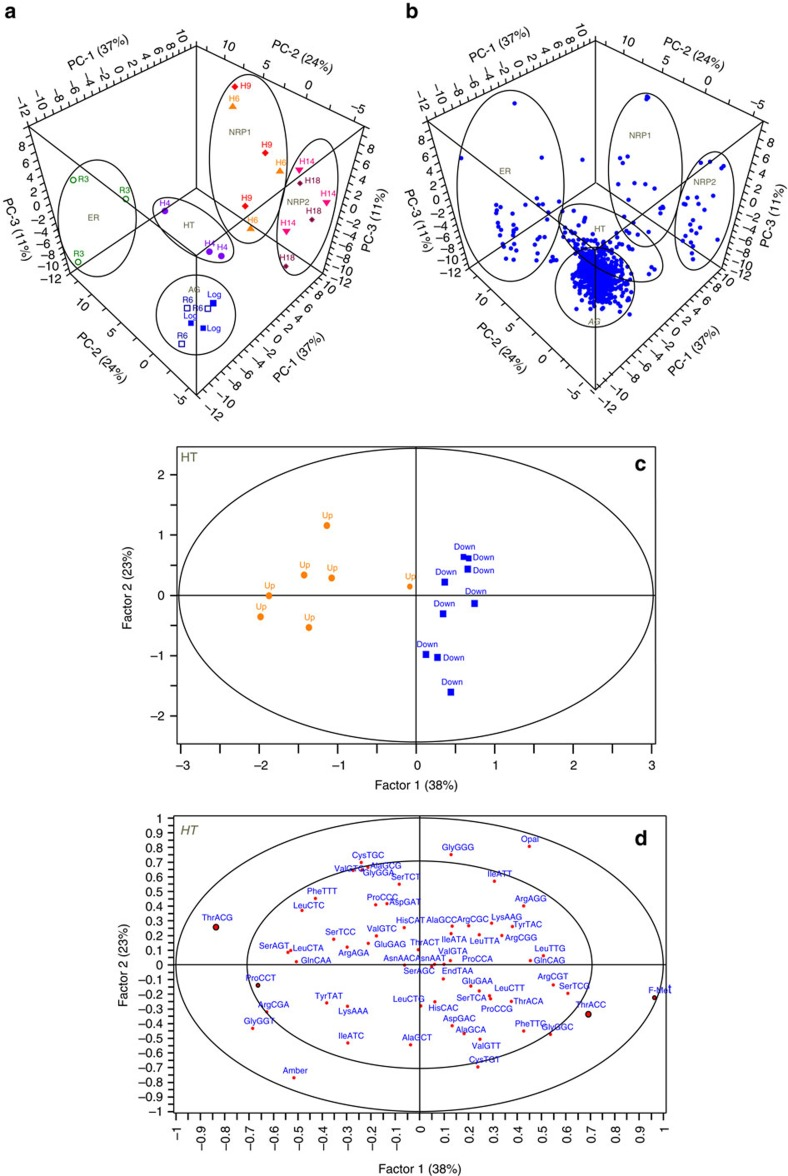The choice between codons Thr ACG and Thr ACC influences protein up- or downregulation in the BCG response to hypoxia. ( a , b ) Principal component analysis was performed with fold-change data for the 965 most quantifiable proteins (loadings, b ) across the hypoxia time course (scores, a ). Clustering of sample eigenvectors (Log■, H4·, H6▲, H9⧫, H14▼, H18*, R3○ and R6□) in the scores plot ( a ) and protein variables (Blue filled circle) in the loadings plot ( b ) is highlighted using data eclipses, with the clusters reflecting both the growth phenotypes (acronyms defined in Supplementary Fig. 1a ) and the tRNA modification clustering in the heat map in Fig. 1b . Seventy-two per cent of observed variance can be explained by three principal components ( n =3, PC-1: 37%, PC-2: 24%, PC-3: 11%). ( c , d ) Partial least squares regression analysis of significantly up- (Orange filled square) or down- (Blue filled circle) regulated proteins and their codon usages (Red filled circle) at H4 visualized by scores ( c ), and X,Y correlation loadings representing codon usage (X) against extent of protein up- or downregulation (Y) ( d ). The proteins were selected blindly for PLS analysis based on statistical significance ( P