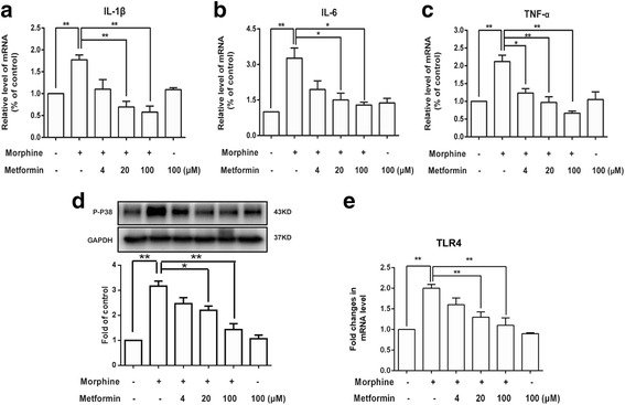 Metformin inhibited morphine-induced inflammation in microglial BV-2 cells. Cells were pretreated with metformin (4, 20, or 100 μM) for 15 min before the challenge of morphine (200 μM). BV-2 cells were collected and analyzed 6 h after morphine was given. a – c Metformin suppressed the expression of pro-inflammatory factors induced by morphine in BV-2 cells in a dose-dependent manner ( n = 4). The levels of IL-1β, IL-6, and TNF-α mRNA were determined using real-time quantitative polymerase chain reaction (PCR). Glyceraldehyde 3-phosphate dehydrogenase (GAPDH) was used as an invariant control. d Metformin inhibited the phosphorylation of p38 induced by morphine treatment in BV-2 cells in a dose-dependent manner ( n = 4). e Metformin suppressed TLR-4 mRNA expression induced by morphine in BV-2 cells in a dose-dependent manner ( n = 4). The level of TLR-4 mRNA was determined with real-time quantitative PCR. (* p