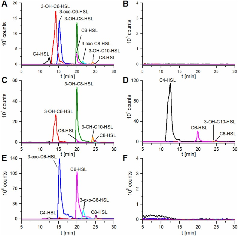 Identification of the produced AHLs using LC-MS/MS. Extracted ion chromatograms (LC-MS/MS, precursor ion scan, positive ionization mode) of [M+H] + ions of AHLs present in (A) P . aurantiaca PB-St2 crude extract after 22 h cultivation, (B) E . coli XL1-Blue/pBluescript SK(-)Δ lacZ crude extract, and extracts of E . coli XL1-Blue expressing (C) phzI , (D) csaI , (E) aurI , and (F) hdtS . C4-HSL (black, m/z 172–173), 3-OH-C6-HSL (red, m/z 216–217), 3-oxo-C6-HSL (blue, m/z 214–215), C6-HSL (pink, m/z 200–201), 3-OH-C8-HSL (green, m/z 244–245), 3-oxo-C8-HSL (cyan, m/z 242–243), 3-OH-C10-HSL (orange, m/z 272–273), C8-HSL (purple, m/z 228–229).