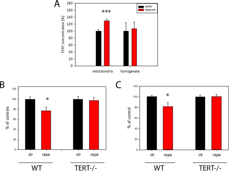 TERT protein is required for the reduction of H 2 O 2 release from mouse brain mitochondria by rapamycin ( A ) Mouse TERT protein abundance in brain homogenates and isolated mitochondria after 4 months rapamycin treatment. (n=5 per group, t-test, ***p