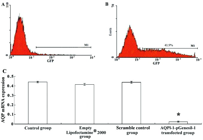 Positive transfection rate detected by flow cytometry. (A) Transfected cartilage cells with (A) no GFP expression; (B) transfected cartilage cells with GFP expression. (C) AQP-1 mRNA expression in control cells, cells treated with Lipofectamine ®  2000 alone, cells transfected with scrambled shRNA, and cells transfected with AQPl-1-pGenesil-1.  * P