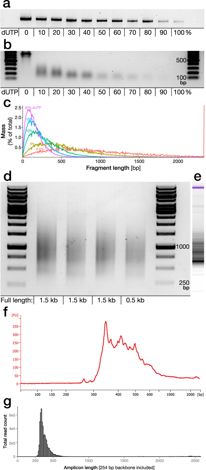 """Fragmentation of genetic sequences for insertion in barcode labelled plasmids. (a) A novel version of the Pfu-based proof-reading polymerase """"Phusion U"""" allows for insertion of dUTP during PCR amplification. However, efficiency of amplification is reduced with increasing dUTP/dTTP fraction as exemplified through amplification of a genomic sequence (1.1 kb long) utilized in library 1. (b) The percentage dUTP used in the PCR reaction is determining the distribution of fragment sizes after nicking by Uracil-DNA-Glycosylase (UDG) and NaOH single strand breakage. (c) As the cleavage sites are strictly sequence dependent and statistically predictable based on dUTP fraction and insertion frequency it can be simulated using the NExTProg 1.0 software. Here this was modelled using the sequence for library 1. (d) The dUTP/UDG fragmentation protocol was applied to three amplicons with different sequences but similar length and GC content (49–52%), aimed for inclusion in library 3, and one shorter amplicon, with 10% dUTP. (e,f) The fragments from the first lane were further analysed by higher accuracy electrophoretic analysis (Bioanalyzer) and (g) Illumina sequencing was performed after insertion into a plasmid backbone (library 3)."""