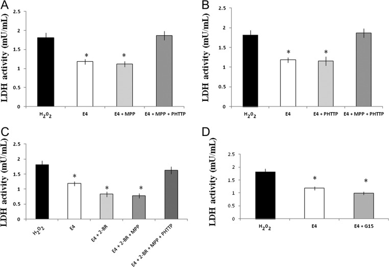 Effect of E4 in combination with different receptor inhibitors on <t>LDH</t> activity in primary hippocampal neuronal cultures subjected to the H 2 O 2 -induced oxidative stress. Primary hippocampal cell cultures were exposed to 3.25 mM E4 alone or in combination with <t>MPP,</t> PHTTP, G15 and/or 2-BR after induction of oxidative stress. (A) LDH activity was significantly decreased by treatment with E4 alone or in combination with ER-α inhibitor MPP compared to the H 2 O 2 -treated cell cultures or cultures combinedly treated by E4 + MPP + PHTTP. Combined use of MPP and PHTTP significantly increased the LDH activity compared to the cells treated by E4 alone or in combination with MPP. (B) LDH activity was significantly decreased by treatment with E4 alone or in combination with ER-β inhibitor PHTTP compared to the H 2 O 2 -treated cell cultures or cultures combinedly treated by E4 + MPP + PHTTP. Combined use of MPP and PHTTP significantly increased the LDH compared to the cell cultures treated by E4 alone or in combination with PHTTP. (C) Inhibition of palmitoylation alone or in combination with MPP significantly downregulated LDH activity compared to the H 2 O 2 -treated cells or to those treated by E4 alone. Combination of E4 with 2-BR, MPP and PHTTP significantly upregulated LDH activity compared to the cell cultures treated by E4 or 2-BR alone or in combination with MPP. (D) Cell cultures treated by E4 alone or in combination with GPR30 inhibitor G15 had significantly lower LDH activity compared to the cultures treated by H 2 O 2 alone. No significant difference was observed between the cells treated by E4 alone or in combination with G15.