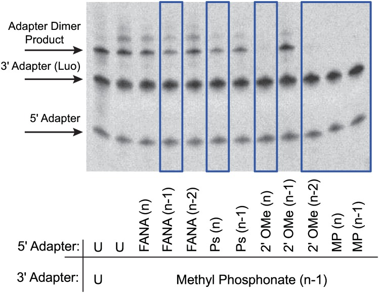 Ligation screen for modified adapters that suppress adapter dimer formation. Example of modifications screened on the 5´adapter for ligation suppression against the Luo 3΄ Adapter with MP (n-1). Unmodified adapters were shown for comparison (U = unmodified). Adapter concentrations were 1 μM. Ligations performed with 10 U T4 RNA Ligase 1, 1 mM ATP, and 20% PEG, incubated for 2 hours at 37°C. Candidate modifications which reduce dimer formation are highlighted with blue box.