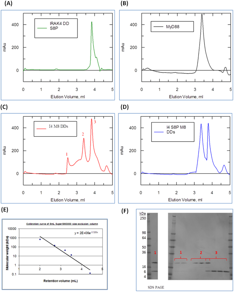 Phosphorylated Ser8 IRAK-4 death domain interferes with the Myddosome formation. ( A–D ) Absorbance Elution spectrum of a TSKgel SuperSW3000 analytical size exclusion column at 280 nm. ( A ) 0.5 mg.ml −1 of IRAK-4 death domain only. ( B ) 0.5 mg.ml −1 of MyD88 DD only. ( C ) 1:1 mix of MyD88 and non-phosphorylated IRAK-4 death domains concentrated to 0.5 mg.ml −1 prior to loading. ( D ) 1:1 mix of MyD88 and Ser8 phosphorylated IRAK-4 death domains concentrated to 0.5 mg.ml −1 prior loading. ( E ) Calibration of gel filtration using protein standard markers ( F ) 4–20% reducing <t>Tris-Glycine</t> <t>SDS</t> <t>PAGE</t> of fractions corresponding to peak 1, 2 and 3 of figure 15a. Fractions corresponding to peak 1 were concentrated using a 3 kDa MW cut-off Amicon Spin Filters for better visualisation of samples. One of three repeats is shown.