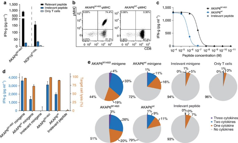 Characterization of mutant-specific T-cell responses in HLA-matched healthy donors. T-cell responses of two different matched healthy donors against neoepitopes AKAP6 M1482I and NOP16 P169L . Effector cells were coincubated in duplicates with T2-A3 or T2-B7 pulsed either with the relevant peptide or control peptides with the same HLA restriction as the mutated ligands, results are shown as mean ( a ). Staining of T-cell line HD1-AKAP6 with the mutated or wt multimer ( b ). IFN-g release of the T-cell line on peptide titration of AKAP6 M1482I and its non-mutated counterpart using T2-A3 as targets (duplicates are depicted as mean) ( c ). IFN-g secretion (left Y-axis) and target-cell lysis (right Y -axis) after coincubation of the T-cell line HD1-AKAP6 with peptide-pulsed and minigene-transduced LCL1 cells performed in triplicates, data shown as mean±s.d. ( d ). Intracellular cytokine staining (IFN-g, TNF-a and IL-2) on co-culture of the T-cell line HD1-AKAP6 with LCL1 cells, either peptide-pulsed or minigene-transduced, determined by flow cytometry. Cells were gated on ethidium monoazide bromide-negative and CD8-positive events ( e ).