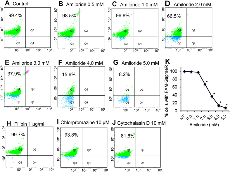 Effect of endocytosis inhibitors on GapmeR cellular internalization in human T-cells. Primary human T-cells were untreated ( A , control ) or pre-treated with amiloride [0.5 mM ( B ), 1.0 mM ( C ), 2.0 mM ( D ), 3.0 mM ( E ), 4.0 mM ( F ) or 5.0 mM ( G )], 1 μg/ml filipin ( H ), 10 μM chlorpromazine ( I ), 10 mM cytochalasin D ( J ) for 30 min. Cells were then incubated with 500 nM FAM-GapmeR for 24 h to allow gymnosis. Cellular internalization of GapmeR was analysed by flow cytometry. Results show dose-dependent inhibition of FAM-GapmeR cellular uptake in cells treated with amiloride ( K ) but not with other three inhibitors. Data represent at least three independent experiments using T-cells purified from at least 3 different donors, *p
