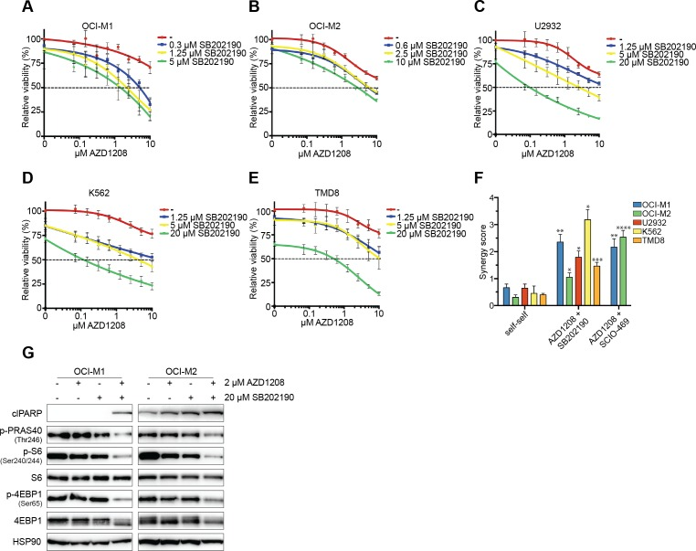 Pharmacological inhibition of p38 synergizes with AZD1208 through reduced mTOR signaling A.-E. p38 inhibitors enhance AZD1208 response. OCI-M1, OCI-M2, U2932, K562, and TMD8 cells were treated with increasing concentrations of AZD1208 (x-axis) and co-treated with the p38 inhibitor SB202190. Viability was measured after 5 days using CellTiter-Blue ( n = 3). F. p38 inhibitors are synergistic with AZD1208. OCI-M1, OCI-M2, U2932, K562, and TMD8 cells were treated with 2-fold dilutions of AZD1208, SB202190, SCIO-469, or combinations for 5 days. Viability was assessed by CellTiter-Blue and used to calculate synergy scores. Self-self combination treatments were used as a baseline to determine significance ( n = 3). P-values were calculated using a one-way ANOVA and Dunnett's test. p ≤ 0.05 (*), p ≤ 0.01 (**), p ≤ 0.001 (***), and p ≤ 0.0001 (****) G. Combined inhibition of PIM and p38 results in reduced AKT/mTOR signaling after 48 hours. OCI-M1 (2.10 5 cells/well in 6-well plate) and OCI-M2 (4.10 5 cells/well in 6-well plate) cells were treated for 48 hours with 2 μM AZD1208, 20 μM SB202190, or the combination. Cell lysates were harvested and subjected to western blot analysis ( n = 3).