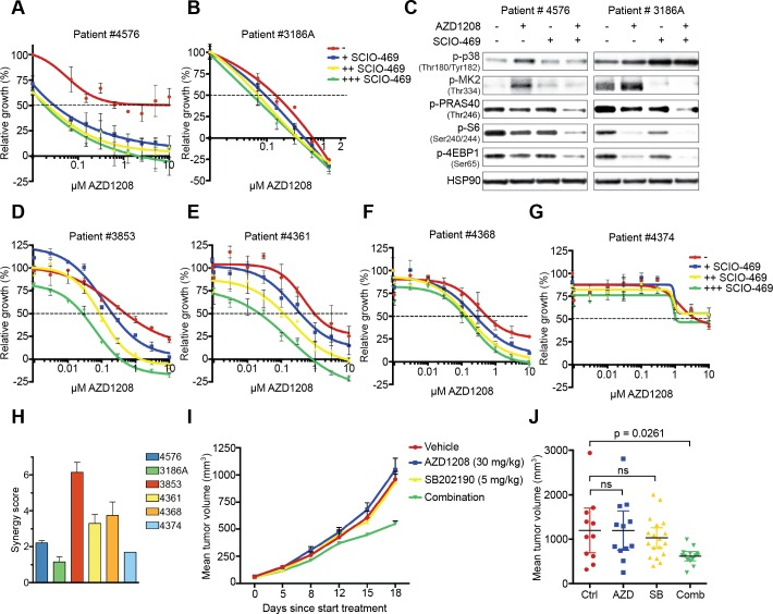 Suppression of p38 signaling restores sensitivity to PIM inhibition in primary AML cells and mouse xenografts A.-B. Inhibition of p38 enhances AZD1208 response in primary AML cells. Patient cells were treated with increasing concentrations of AZD1208 (x-axis) and co-treated with 0.313 μM, 1.25 μM, or 5 μM SCIO-469. Growth was measured after 4 days using MTT. A day 0 measurement was used as a baseline value (y-axis = '0') for growth. Negative relative growth indicates a cytotoxic effect ( n = 2). C. Combined p38/PIM inhibition suppresses mTOR signaling. Primary AML cells were treated for 24 hours with 1 μM AZD1208, 10 μM SCIO-469, or the combination. Cell lysates were harvested and subjected to western blot analysis. D.-G. Inhibition of p38 enhances AZD1208 response in a validation set of primary AML cells. Cells were treated with increasing concentrations of AZD1208 (x-axis) and co-treated with 0.3 μM, 1 μM, or 3 μM SCIO-469. Viability was measured after 72 hours using CellTiter-Glo. A day 0 measurement was used as a baseline value (y-axis = '0') for growth. Negative relative growth indicates a cytotoxic effect ( n = 2). H. SCIO-469 is synergistic with AZD1208. Primary AML cells were treated with 2-fold dilutions of AZD1208, SCIO-469, or the combination. Viability was assessed by CellTiter-Blue and used to calculate synergy scores. I. Dual PIM/p38 inhibition suppresses tumor growth in a xenograft model. K562 cells (5.10 6 ) were subcutaneously implanted in Rag2 −/− IL2γc −/− mice. Once tumors were established, animals were treated with vehicle, AZD1208 (30 mg/kg), <t>SB202190</t> (5 mg/kg), or both drugs in combination. J. Mean tumor volume after 18 days treatment. Vehicle ( n = 11), AZD1208 ( n = 12), SB202190 ( n = 18), and combination ( n = 14). P -values were calculated via one-way ANOVA and Dunnett's test.