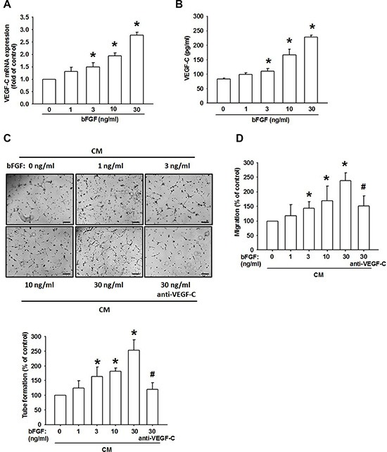 bFGF promotes the lymphangiogenesis through upregulation of VEGF-C in chondrosarcoma cells ( A and B ) JJ012 cells were incubated with bFGF (1–100 ng/mL) for 24 h, VEGF-C expression was measured by qPCR and ELISA ( n = 6–8). ( C and D ) JJ012 cells were incubated with bFGF (1–30 ng/mL) for 24 h, or pretreated for 30 min with IgG control antibody or VEGF-C antibody (1 μg/mL), followed by stimulation with bFGF (30 ng/mL) for 24 h. Medium was collected as CM, then applied to LECs for 24 h. Capillary-like structure formation and in vitro cell migration in LECs were examined by tube formation and the Transwell assay (Scar bar = 100 μm) ( n = 6–8). Data are expressed as the mean ± SEM: * P
