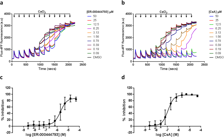 Ca 2+ retention capacity of freeze-thawed Hela S3 human mitochondria. Hela S3 mitochondria (0.5 mg protein ml −1 ) were incubated with Fluo-4FF (0.35 μM) in the presence of succinate (10 mM) and rotenone (1 μM). Pulses of 5 μM CaCl 2 were sequentially added at 3 minute intervals and extra-mitochondrial Fluo-4FF fluorescence measured. Representative raw traces of Ca 2+ uptake in the presence of ( a ) ER-000444793 and ( b ) CsA demonstrate complete Ca 2+ uptake prior to concentration-dependent Ca 2+ -induced mPT. ( c,d ) Area under the curve was calculated between 60–660 seconds and results are expressed as % inhibition, normalised to DMSO (0% inhibition) and CsA (5 μM; 100% inhibition). Data are expressed as means (± s.d.) of at least three independent experiments. Curve fitting used a 4-parameter logistic equation (GraphPad Prism). Raw traces are representative of at least three independent experiments. Abbreviations: CsA; cyclosporin A, a.u; arbitrary unit.