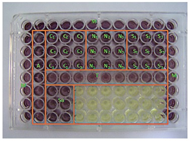 Configuration of the <t>96-well</t> flat bottom plates in which the cytotoxicity assay was carried out. M = complete medium without cells. A = complete medium without extract solutions. Sa = artificial saliva (negative control). T = TNF (positive control). C1, C2, and C3 = mini-implants Conexão, tested in triplicate. N1, N2, and N3 = mini-implants Neodent, tested in triplicate. S1, S2, and S3 = mini-implants SIN, tested in triplicate. The yellow wells remained empty.