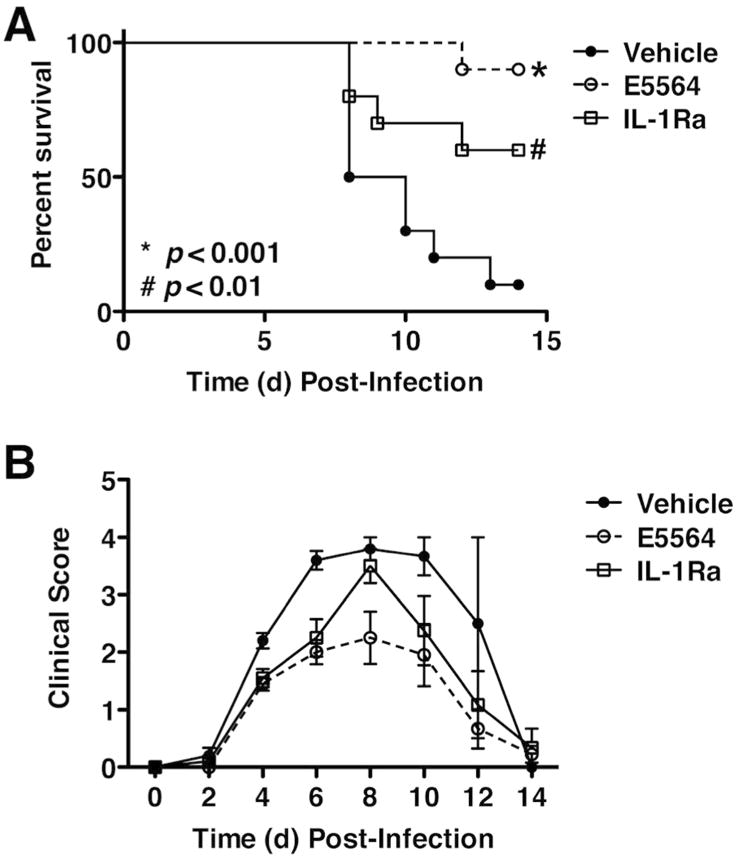 Effect of IL-1Ra against lethal influenza challenge. C57BL/6J mice were infected with mouse-adapted influenza strain PR8 (∼7500 TCID 50 , i.n.). Mice received vehicle (saline; i.v.), Eritoran (E5564; 200 μg/mouse; i.v.), or the IL-1Ra (150 μg/mouse; i.v.) from day 2 to day 6 post-infection. Survival (top panel) and clinical scores (bottom panel) were monitored daily for 14 days. Data shown is combined from 2 separate experiments (5 mice/treatment group/experiment).