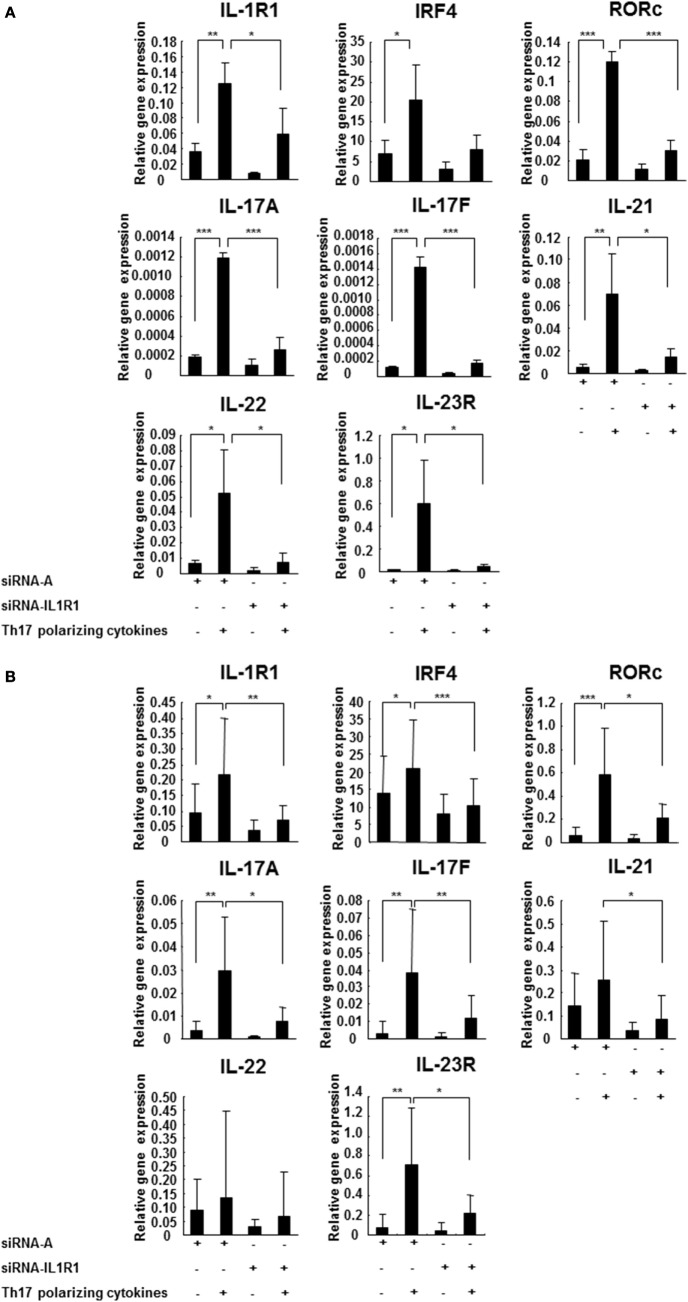 IL-1R1 signaling induces Th17 cell differentiation . CD4 + CD45RA + cells were derived from three HCs (A) and seven RR MS patients (B) and transfected with a control siRNA A or siRNA IL-1R1, stimulated with plate-immobilized anti-CD3 and anti-CD28 mAb and cultured in serum-free medium in the absence or presence of Th17-polarizing cytokines. The total RNA was extracted at 72 h, and the expression of the indicated genes was measured using RT-PCR. The results are expressed as relative gene expression normalized against 18S mRNA expression. Statistical analysis was performed using repeated measures ANOVA, * p