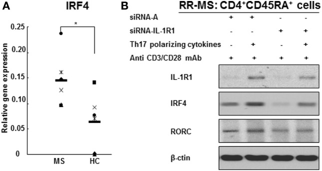 IL-1R1 and IRF4 are required for human Th17 cell differentiation . (A) IRF4 gene expression in the CD4 + T cell from RR MS patients is significantly increased in comparison to HCs. CD4 + T cells derived from six RR MS patients and six HCs were separated using magnetic beads, and the total RNA was extracted. The gene expression of IRF4 and 18S was measured by RT-PCR. The results are expressed as relative gene expression normalized for 18S mRNA expression. Statistical analysis was performed using t -tests. * p