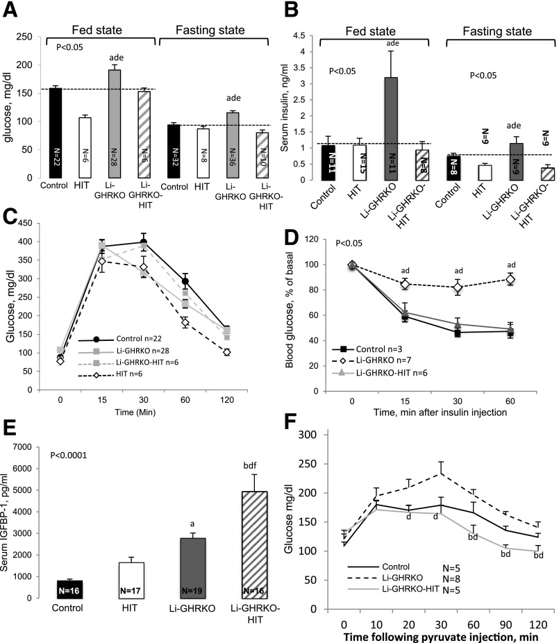 Hepatic-derived IGF-1 improves systemic glucose homeostasis in the Li-GHRKO mice. Blood glucose levels ( A ) and serum insulin levels ( B ) were determined in male mice at 16 weeks of age. Intraperitoneal glucose tolerance test ( C ) and intraperitoneal insulin tolerance test ( D ) performed in 16- to 20-week-old male mice in the fed state. E : Serum IGFBP-1 levels determined in male mice at 16–24 weeks of age. F : iPTT performed in 16- to 20-week-old male mice. Data presented as mean ± SEM. N indicates sample size. Significance accepted at P