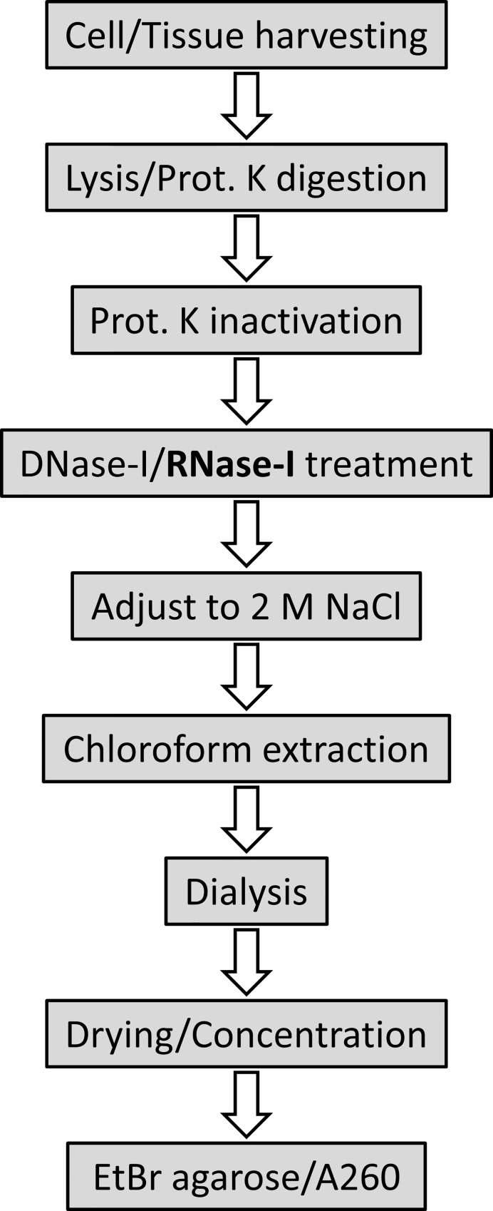 Schematic workflow for glycosaminoglycan (GAG) extraction including RNase treatment Cell/tissue lysates are treated overnight with proteinase K (Prot. K), followed by DNase-I and RNase-I treatment and finally chloroform extraction and dialysis to remove contaminating proteins/DNA/RNA. After drying/concentration of GAG extracts, the purity of the preparations is assessed using ethidium bromide (EtBr) agarose gel electrophoresis, or by measuring the absorbance at 260 nm (A260).