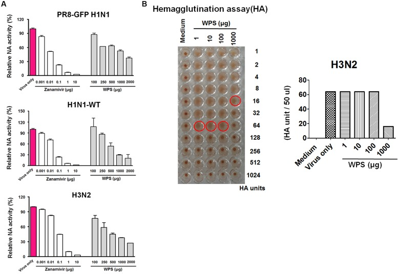 Measurement of the anti-viral activity of WPS using <t>neuraminidase</t> inhibition and hemagglutination inhibition assays. (A) <t>Influenza</t> A viruses (H1N1 and H3N2) were added at 32 hemagglutination units (HAUs) to the indicated concentrations of WPS, zanamivir (positive control), or PBS (negative control); were mixed with <t>NA-Fluor</t> TM substrate; and were incubated at 37°C for 1 h away from light. Fluorescence was monitored (excitation, 365 nm; emission, 445 nm). Data are representative of two independent experiments, and results were reproducible. (B) Hemagglutination inhibition <t>assay:</t> WPS was serially diluted using PBS and added to equal volumes of the viruses (64 HAUs). To assess red blood cell (RBC) hemolysis inhibition, 50 μL 1% chicken RBCs were added to each well of a 96-well plate and incubated for 1 h at room temperature. Data are representative of two independent experiments, and results were reproducible.