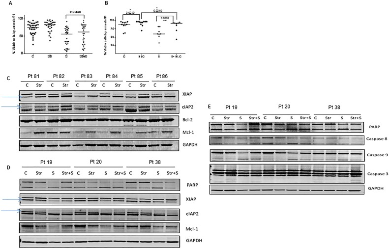 Effect of bone marrow and lymph node microenvironments on smac066-driven apoptosis CLL lymphocytes were co-cultured with NKTert stromal cells (Str) ( A. ; n = 33) or nurse-like cells (NLC) ( B. ; n = 11) in the presence or absence of smac066 (S), (24 hr) and percent viable cells was determined by annexin/PI binding assay. The horizontal lines denote median values. The given p values are derived from paired t -test analyzed using Graph Pad Prizm. The horizontal lines denote median values. C = untreated CLL. C. Primary CLL cells were co-cultured with NKtert stromal cells, and the samples were evaluated for IAPs (XIAP and cIAP2) and anti-apoptotic proteins Bcl-2 and Mcl-1. D. - E. CLL cells were incubated with NKtert stromal cells in the presence or absence of smac066, and expression of IAPs (XIAP and cIAP2), anti-apoptotic protein Mcl-1, and apoptosis marker poly(ADP-ribose) polymerase as well as caspase cleavages (caspases 8, 9, and 3) were evaluated by immunoblotting ( n = 3). GAPDH was used as a loading control.