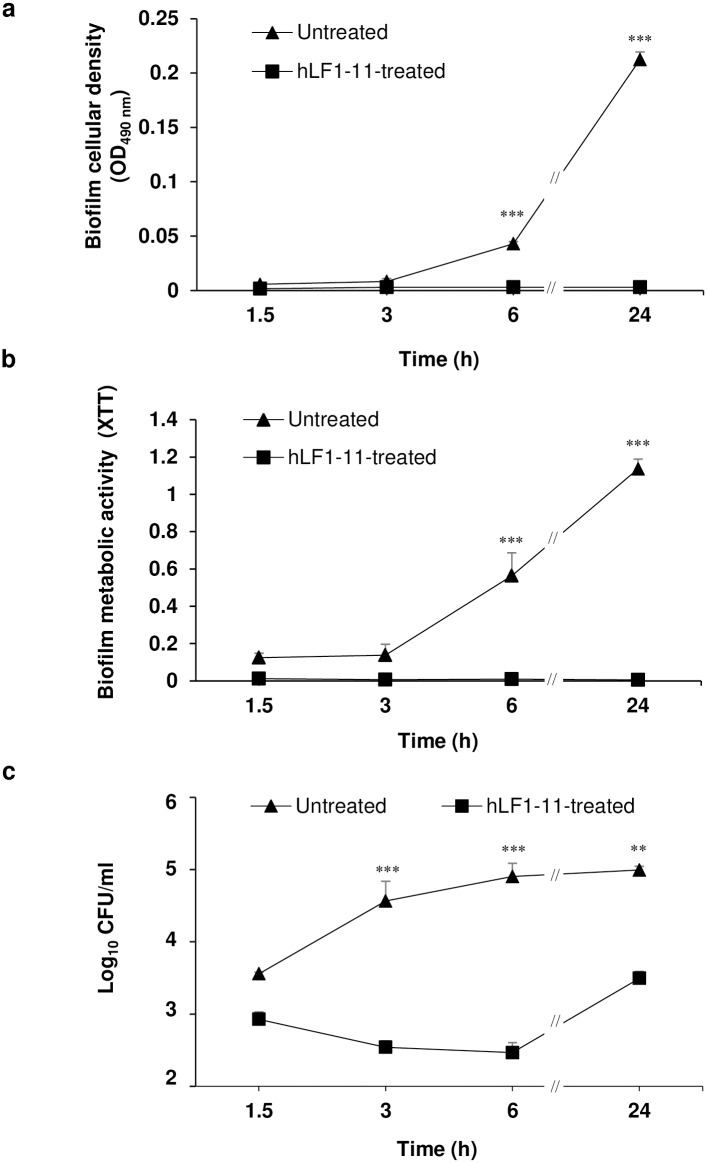 Kinetics of hLF1-11 activity on biofilm formation by four representative C . albicans strains. C . albicans SC5314 cells (1x10 6 cells/ml) were co-incubated with hLF1-11 (88mg/L) for different time periods (1.5, 3, 6 and 24h) at 37°C. Following incubation, the antibiofilm activity of the peptide was assessed in terms of (a) biofilm cellular density reduction, (b) metabolic activity by the XTT assay, and (c) reduction of sessile cell viability. Data are expressed as the mean of three independent experiments ± SEM. hLF1-11-treated sample (square symbol), untreated sample (triangle symbol) ** P