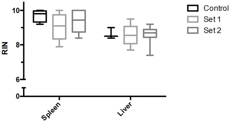 Effects of preservation times post-euthanasia on RNA quality in spleen and liver. Spleens and livers were collected from up to 3 minutes (Positive Control), 9 minutes (Set 1), and 25 minutes (Set 2) post-euthanasia. Set 1 and 2 time points were selected to simulate anticipated dissection timing in microgravity. Spleens were preserved in RNAlater, and livers were frozen on dry ice. All samples were stored at -80°C, and analyzed after 3.5 months for spleen and 4.5 months for liver. RNA quality was measured by calculating the Bioanalyzer-based RNA integrity number (RIN) using the Bioanalyzer 2100. Samples harvested up to 25 minutes post-euthanasia, and stored for less than 5 months at -80°C, yielded RIN values greater than 8. Data sets were assessed for normality using the Shapiro-Wilk test, followed by the Kruskal-Wallis test. Values shown are medians within interquartile (boxes) and full range (whiskers). Spleens: n = 4, 9, and 8 for Control, Set 1 and 2, respectively. Livers: n = 3, 10, and 10 for Control, Set 1 and 2, respectively.