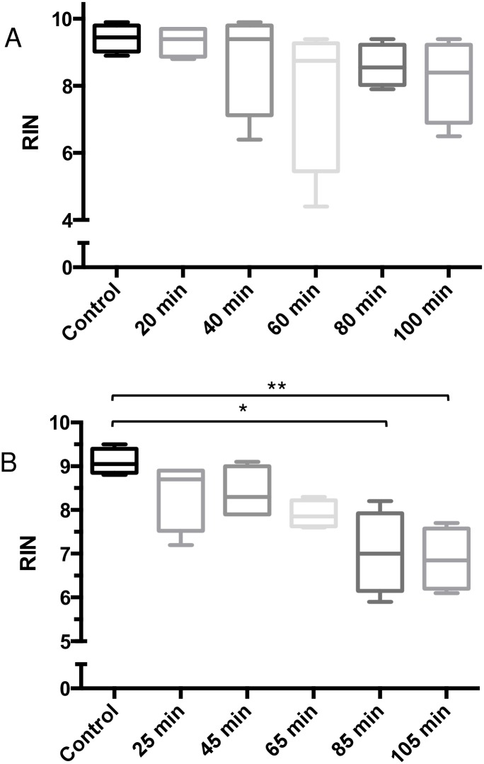 Effects of delayed dissections on RNA quality in spleens and livers. Spleens were collected at 1 (Positive Control), 20, 40, 60, 80, and 100 minutes post-euthanasia, and were preserved in RNAlater. RNAlater-preserved spleen samples yielded high RIN values (RIN > 7.5) for all time points (A). Liver tissues from the same mice in (A) were collected at 2 (Positive Control), 25, 45, 65, 85, and 105 minutes post-euthanasia, and were frozen on dry ice. RNA quality in samples collected up to 45 minutes post-euthanasia were minimally affected, resulting in RIN values > 8. RIN value decreased by 24% in samples collected at 105 minutes post-euthanasia, compared to controls (B). All samples were stored at -80°C for 1 month prior to analysis. Data sets were assessed for normality using the Shapiro-Wilk test, followed by the Dunn post-hoc test (Joint Ranks, compared to Control). Values shown are medians within interquartile (boxes) and full range (whiskers). (n = 4 for each time point). * p