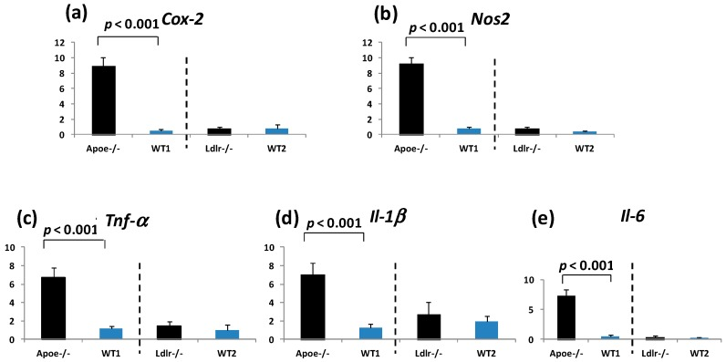 The mRNA expression of ( a ) Cox-2 ; ( b ) Nos2 ; ( c ) Tnf-α ; ( d ) Il-1β ; and ( e ) Il-6 in the colorectal mucosa of the Apoe -deficient, Ldlr -deficient, and their respective wild mice that received AOM and DSS. The mRNA levels of these molecules were measured by Real-Time Quantitative Polymerase Chain Resction. The expression of all five molecules was significantly higher in the Apoe -deficient mice than in the WT mice ( p
