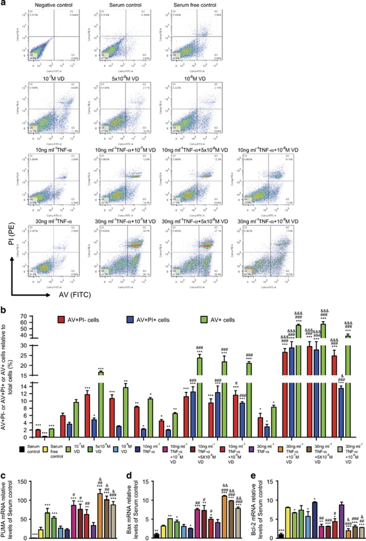 VD with TNF- α promoted apoptosis of rheumatoid FLSs. Human rheumatoid FLS-MH7A cells were treated with DMEM and 10% FBS (serum control), DMEM (serum-free control), DMEM and indicated concentrations of VD with or without TNF- α . ( a ) Flow cytometry of double-stained cells using annexin V (AV) and propidium iodide (PI). ( b ) AV-positive but PI-negative cells (AV+PI–), AV and PI double-positive cells (AV+PI+), and total AV-positive cells (AV+) were quantified. Values are mean±S.E.M. of six determinations per group. * P